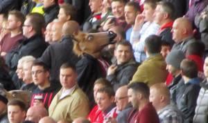 A horses head!